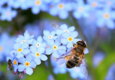 BeeSexual: na stránke videá ako včely opeľujú kvety
